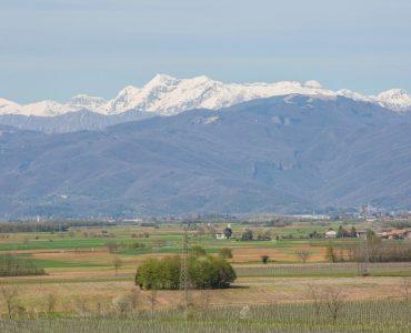 Vino Refosco in Friuli
