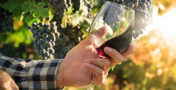 mercato dei vini di piacenza