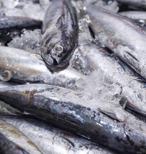 Lattume di tonno