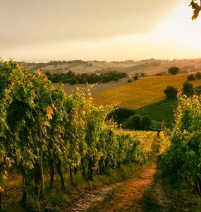 Borghi vino