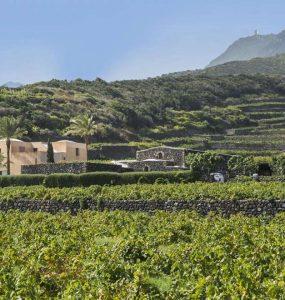 Vino di Pantelleria